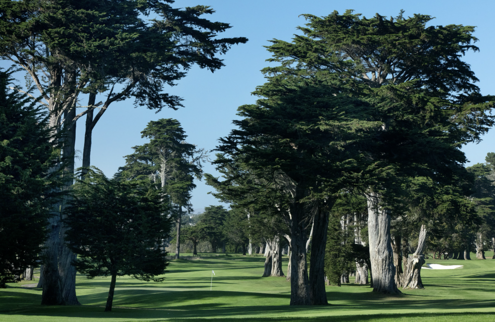 Cypress Tree surround the green at the par-4 5th.